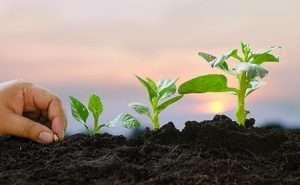 Concepto de crecimiento con plantas